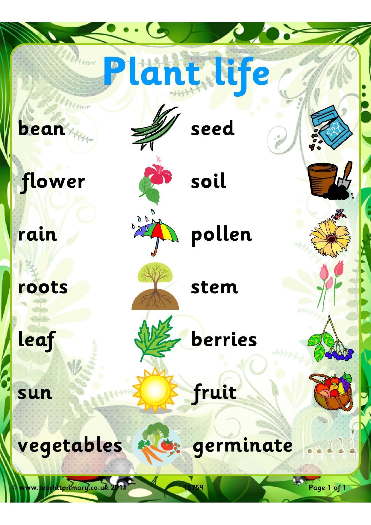 EYFS | KS1 | KS2 | Plants | Teachit Primary