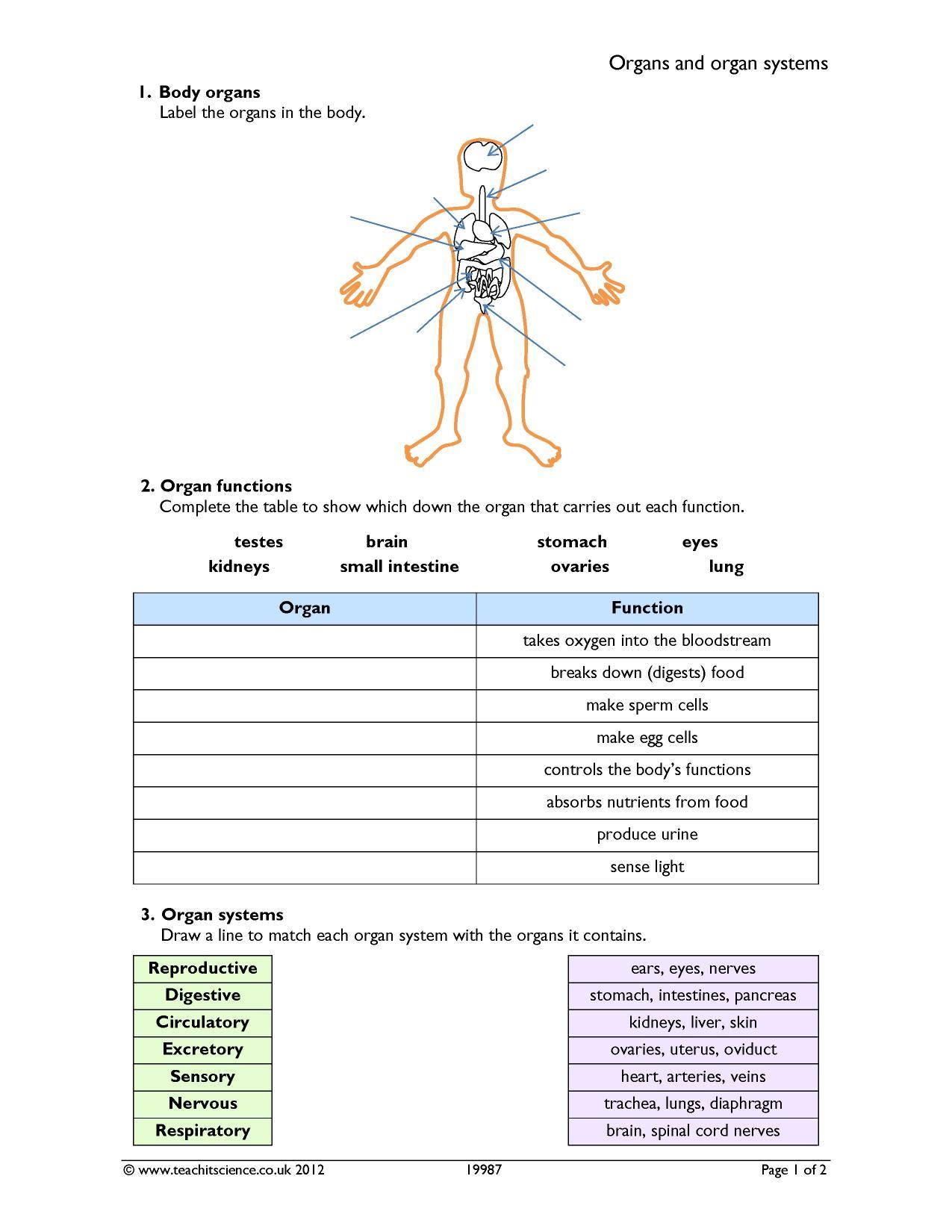 organs and organ systems human biology ks3 all ks3 resources ks3 science resources. Black Bedroom Furniture Sets. Home Design Ideas