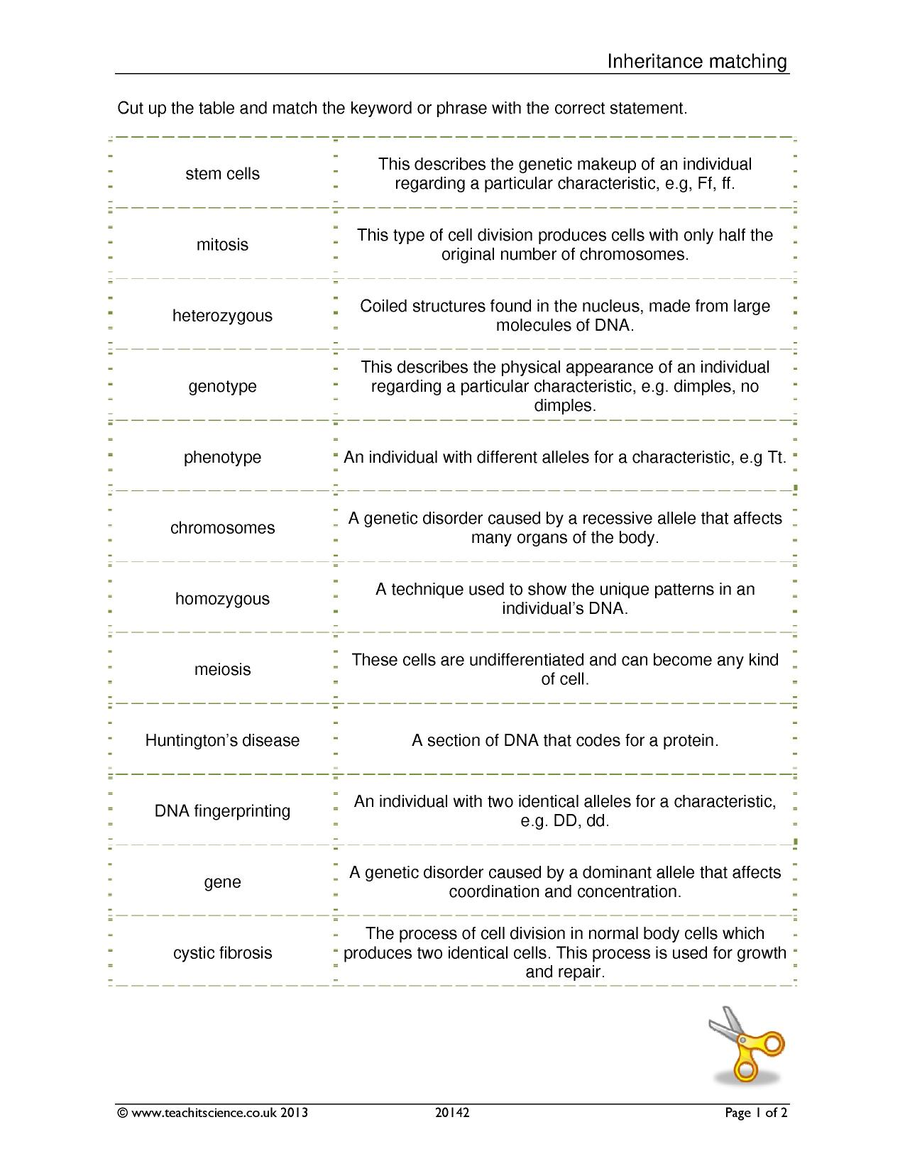 worksheet Cracking Your Genetic Code Worksheet ready made matching activities teachit science 0 preview