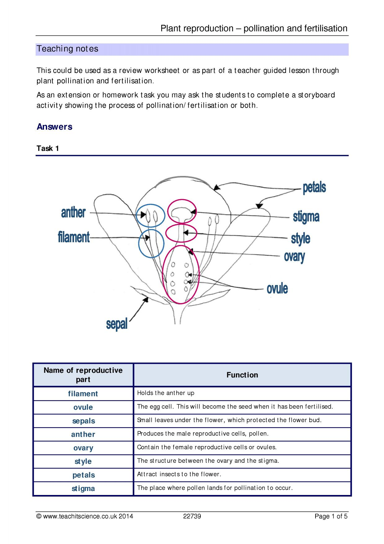 Plant reproduction pollination and fertilisation Plants – Plant Reproduction Worksheet