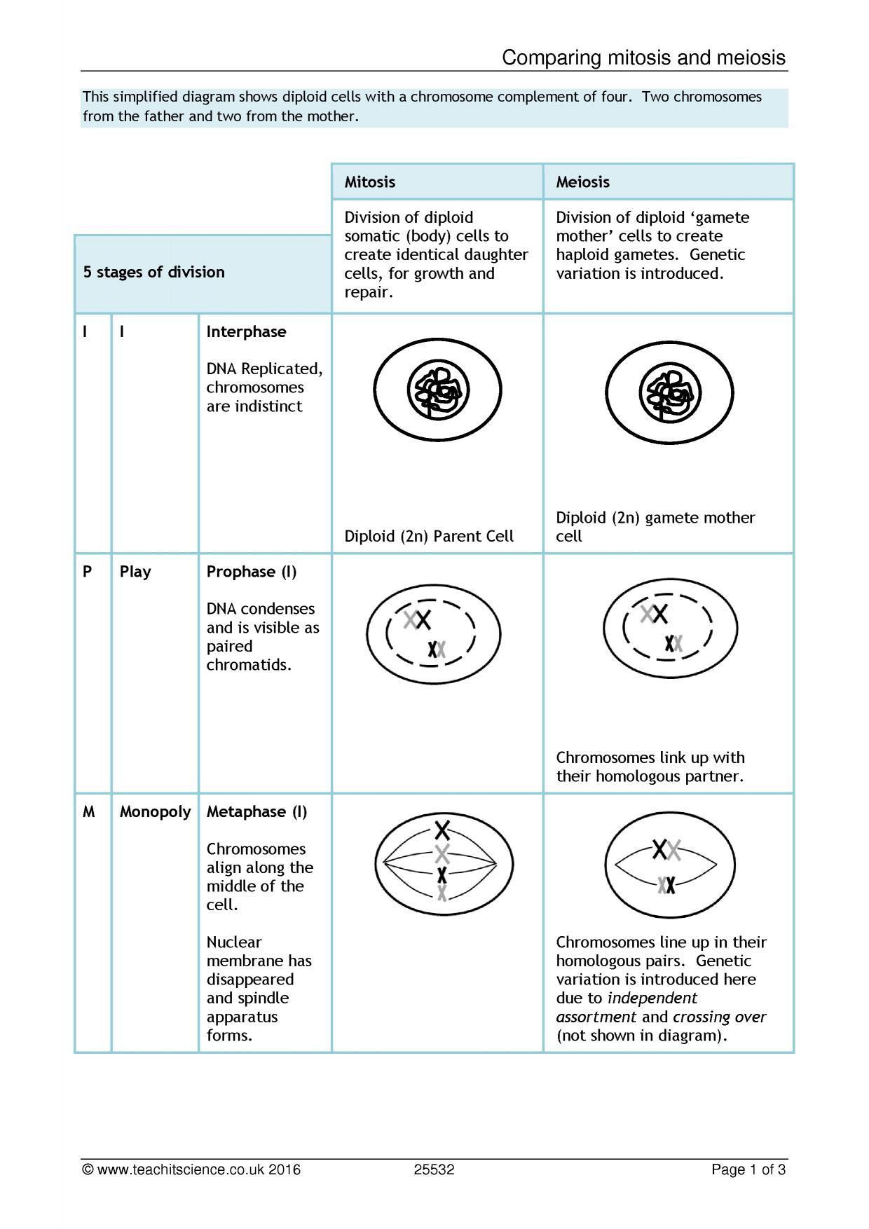 Biology worksheets ks4
