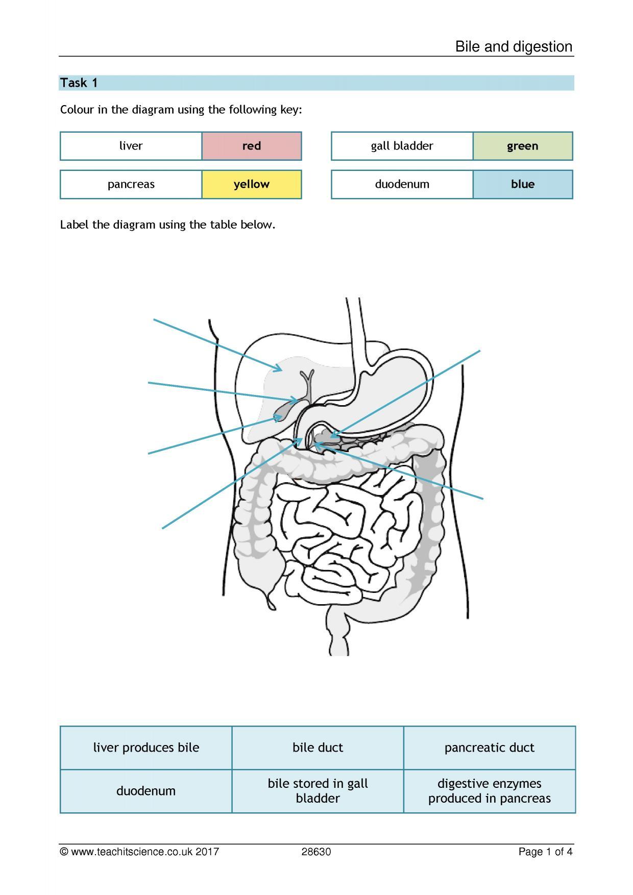 KS4 | Cells, organs and systems (KS4) | Teachit Science